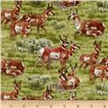 North American Wildlife Pronghorn Antelope Green