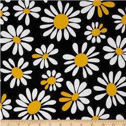 Crazy Daisy Large Daisy Bloom Black/Yellow