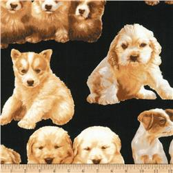 Kaufman Whiskers and Tails Puppies Black