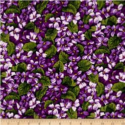 Leopards African Violets Multi