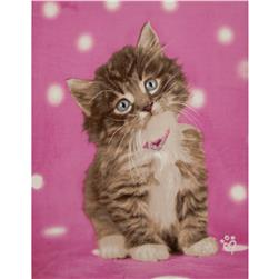 Kitten Fleece Panel Pink