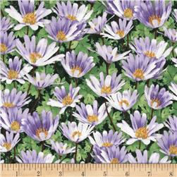 Garden Magic Daisies Green/Multi