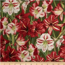Making Spirits Bright Packed Amaryllis Green
