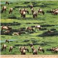 Elk Gathering Grazing Green