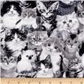Cat Breeds Packed Cats Gray