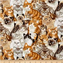 Petpourri Cats Multi