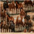 Animal Love Horses Multi