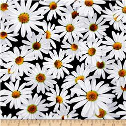 Kanvas Bloom With A View Daisy Dreamers Black